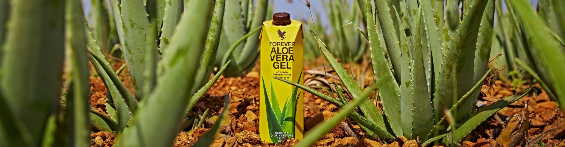 Aloe Vera Lime Juice, Aloe Vera Gel 15